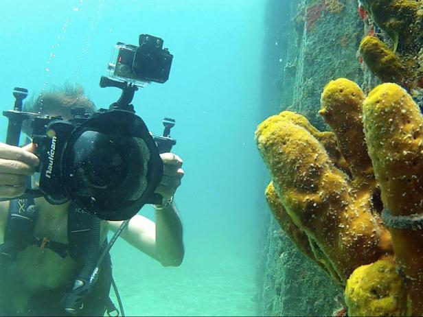 Coral Reef, St. Croix