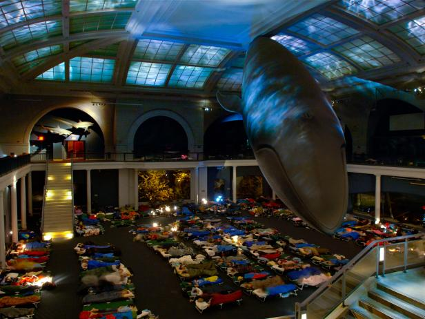 Sleepover, American Museum of Natural History