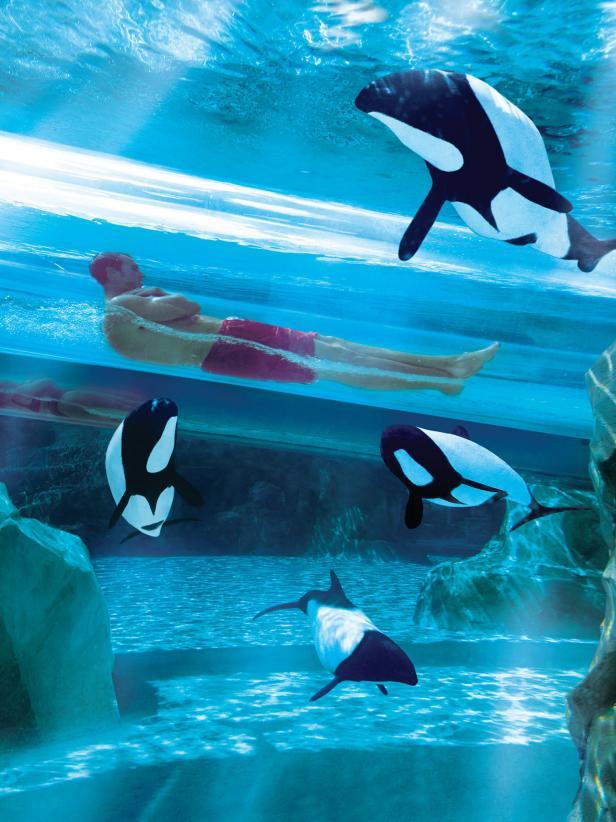 Dolphin Plunge Ride, Aquatica Orlando