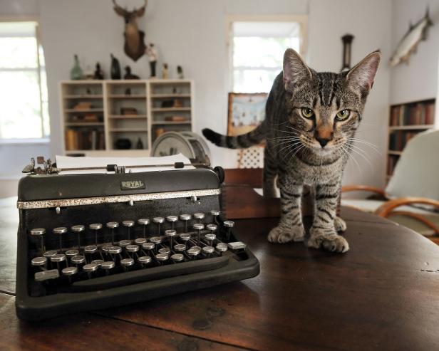 Hairy Truman Cat