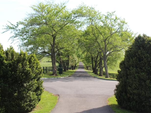 Scenic Driveway in Virginia Horse Country