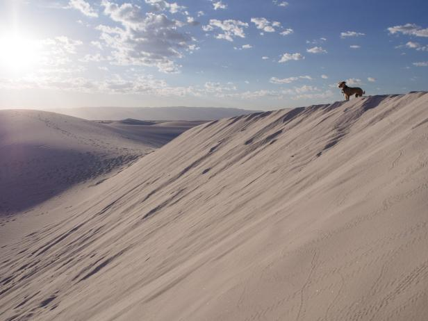 Dog on dune in White Sands New Mexico