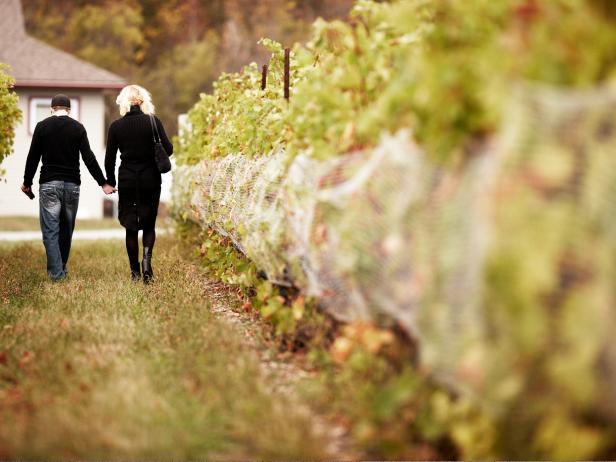 Prince Edward County Vineyard