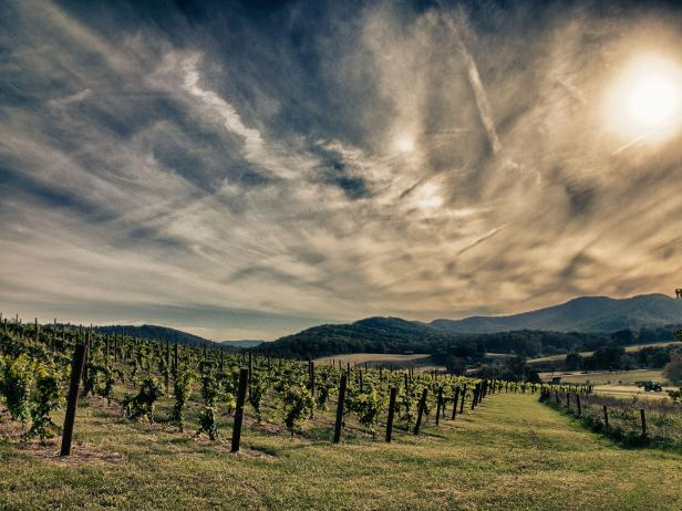 Pippin Hill Vineyard