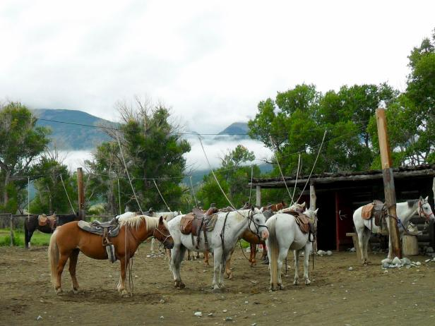 Horses at Zapata Ranch