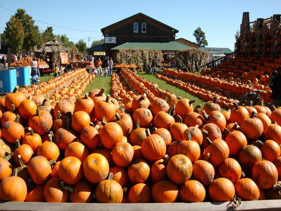 Top 10 U S Pumpkin Patches Travel Channel