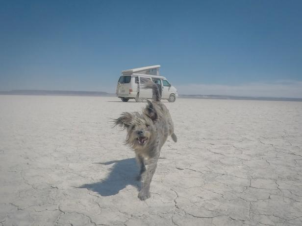 Roadtripping With Dogs: Max Playing In Alvord Desert in Oregon<br />