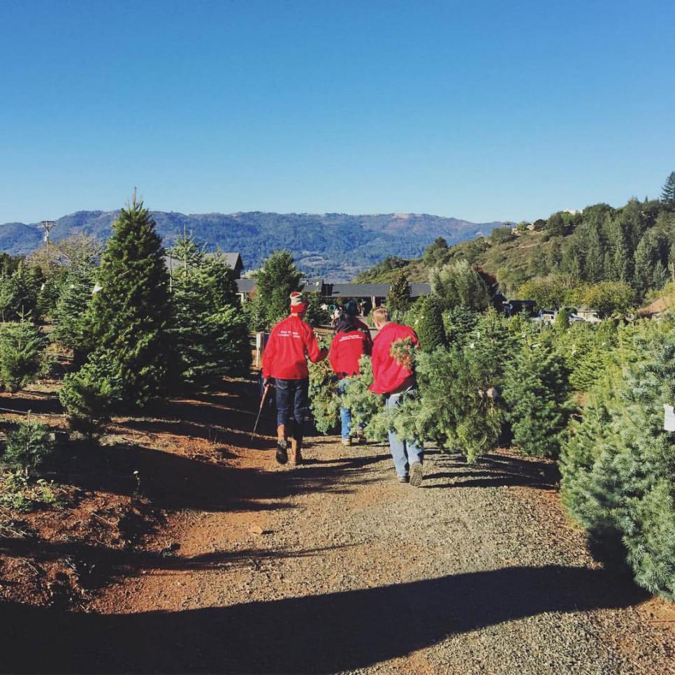 Krueger Christmas Tree Farm: Where To Cut Down Your Own Christmas Tree