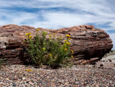 While there's nothing scary about Petrified Forest National Park, there is certainly something mysterious and wondrous.