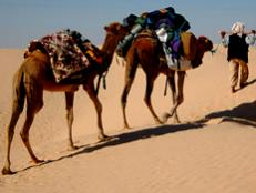 Learn about the best spots to launch your Sahara sojourn.