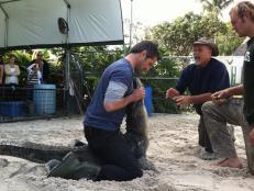 Don Wildman alligator wrestling