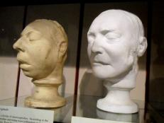 Warren Anatomical Museum