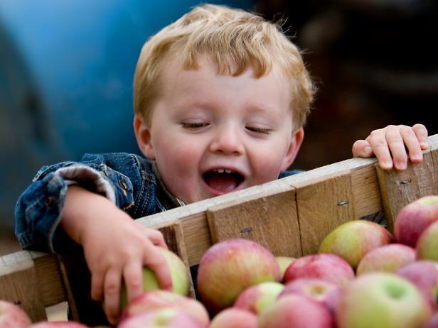 Apple Harvest, Arendtsville, Pennsylvania