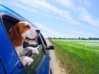 Holiday Pet Travel Guide