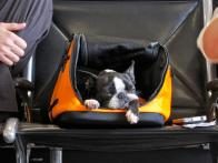 Keeping Pets Healthy While Flying
