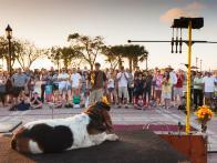 Top 5 Pet-Friendly Towns