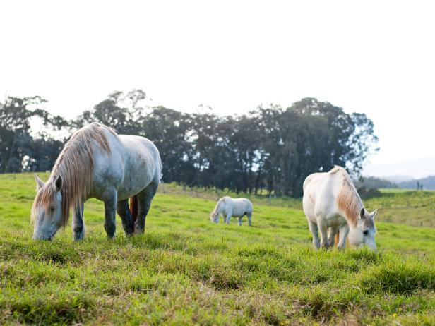 upcountry, horses, horseback riding, kula, maui, hawaii