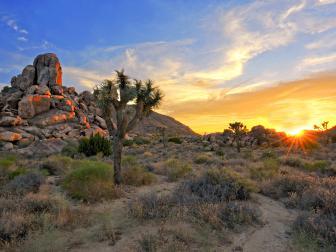 joshua tree national park, sunrise, cactus, rocky cliffs