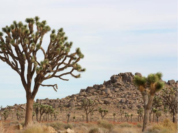 Joshua Tree National Park, Los Angeles, California