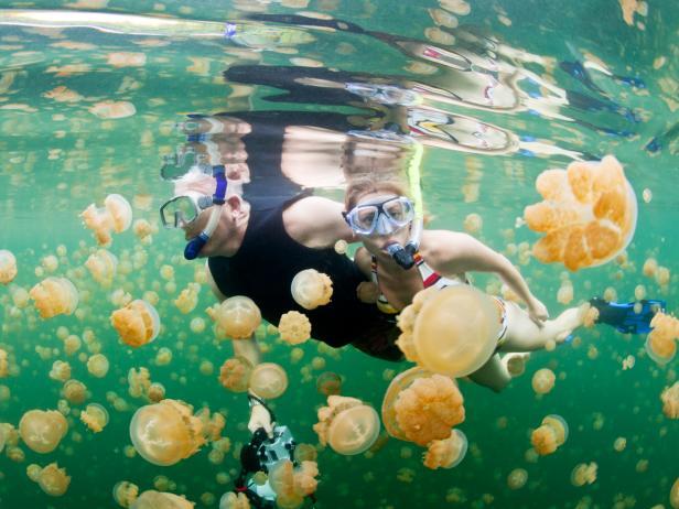 Jellyfish Lake, divers, Palau