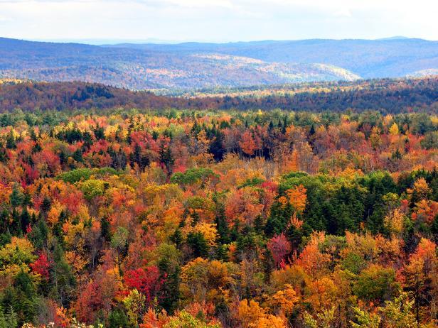fall, folaige, vermont, hogback mountain, greenery