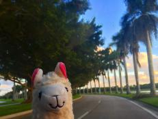 Llama With No Drama gives us major travel goals.