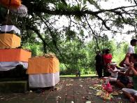 Hindu Elephant Ceremonies