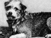 Beloved Traveling Dog