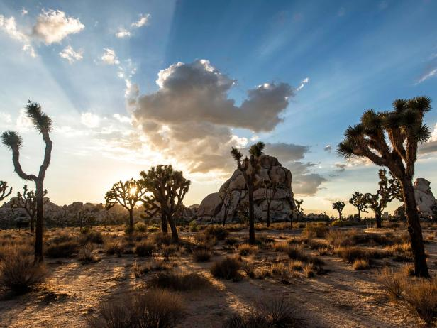 Joshua Tree State Park in Southern California