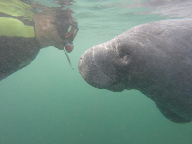 Snorkel with Manatees at Crystal Springs State Park
