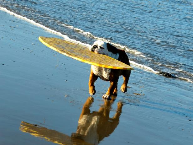 Dog With Surfboard