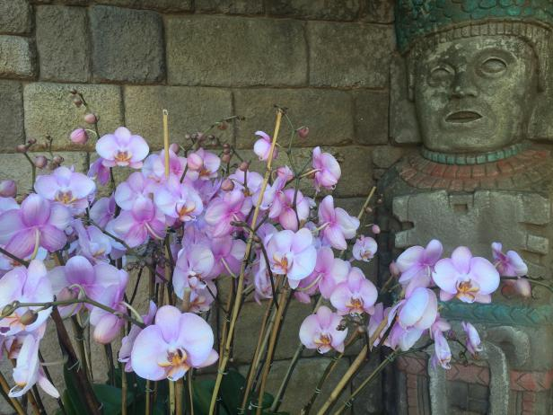 Orchids in Epcot's Mexicon