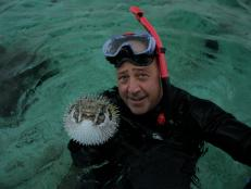 Pufferfish in Pacific Ocean