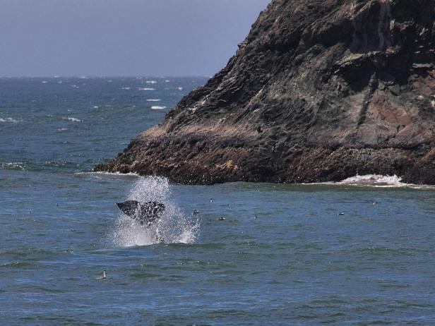 Whale Watching at Sonoma Coast State Park