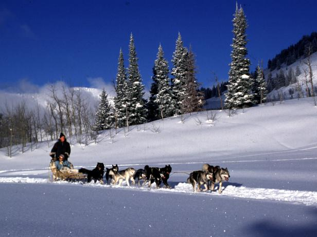 Dog Sledding at Spring Creek Ranch