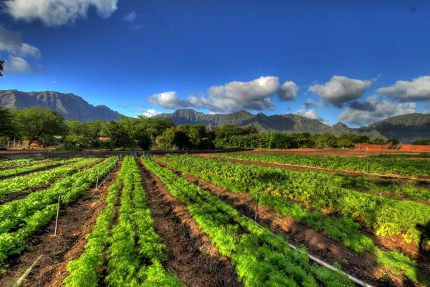 Ka'ala Farm in Hawaii