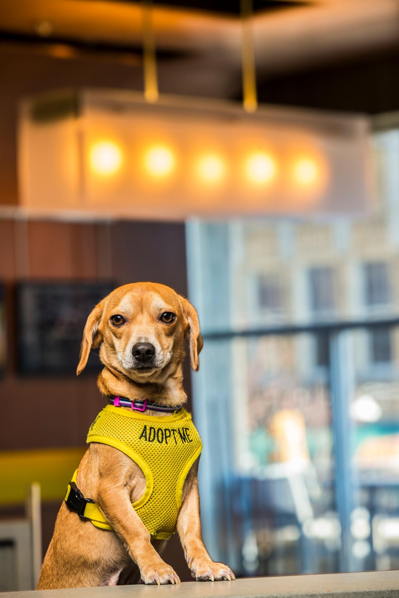 These Hotels Help Foster Dogs Find a Place to Stay | Travel Channel