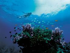 Escape to where two World Heritage wonders -- the Great Barrier Reef and the Daintree Rainforest -- meet.