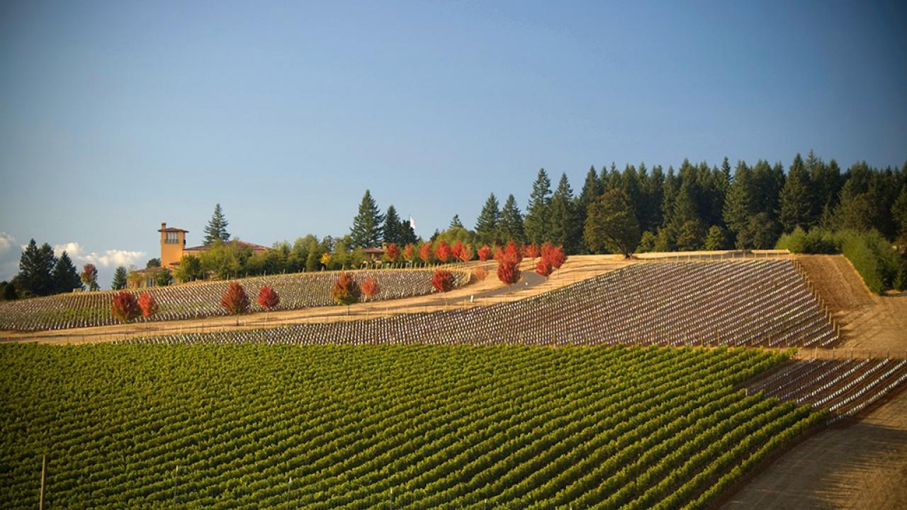Photo by Thinkstock Worldu0027s Best Wine Road