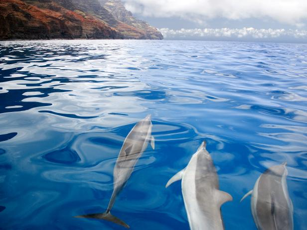 dolphins swim under the water off the coast of hawaii
