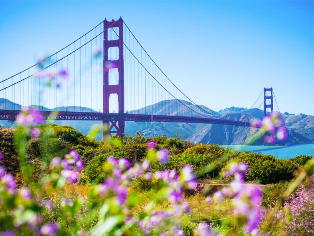 golden gate bridge, spring, flowers, san francisco, california