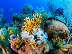 The most surprising thing resulting from the 50-year absence of American tourists in Cuba is the remarkable health of the beautiful coral reefs that line its shores.
