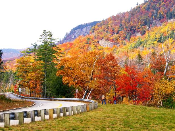 fall foliage along the side of a road in new hampshire