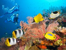outdoors and advenutre, adventure travel, extreme, scuba diving, australia, great barrier reef