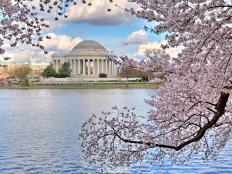Take in the cherry blossoms, museums, doughnuts and more.