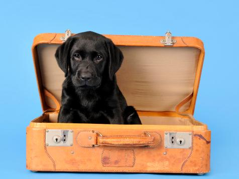 25 Travel-Inspired Pet Names
