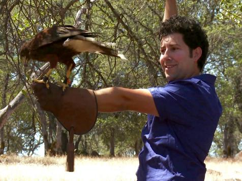 The Royal Art of Falconry